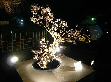 東山花灯路 2008